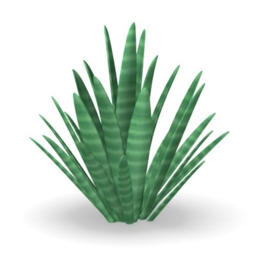 plant1desert royalty-free 3d model - Preview no. 1