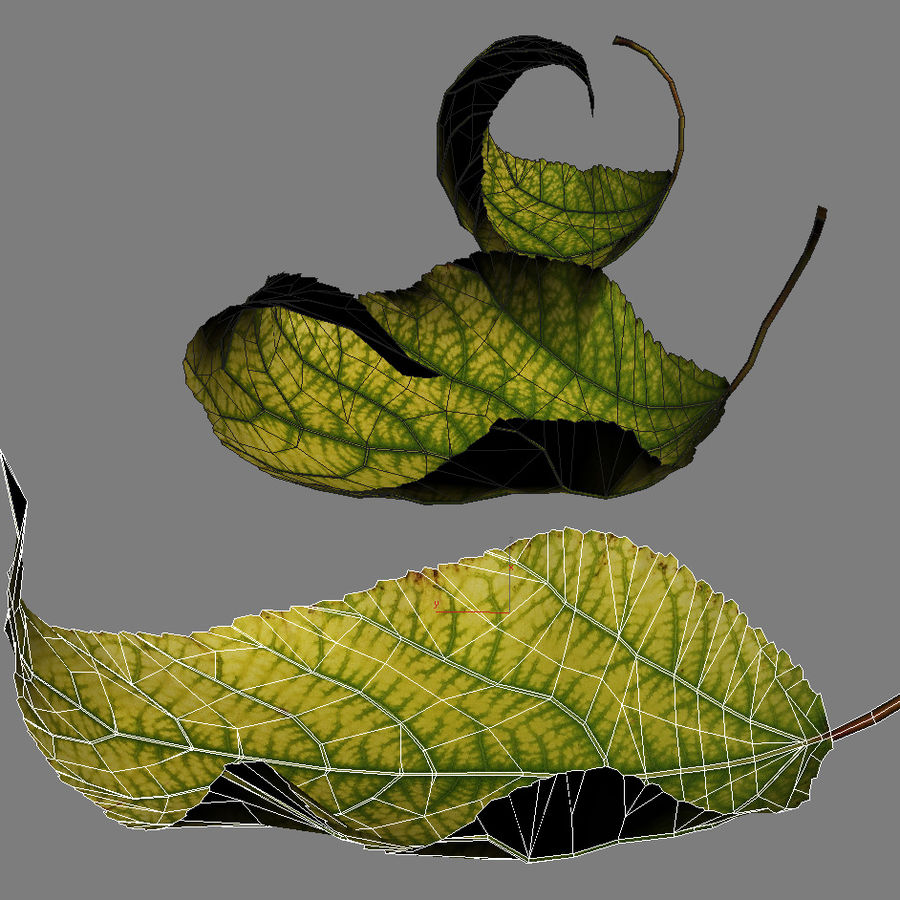 Autumn Leaf yellow royalty-free 3d model - Preview no. 6