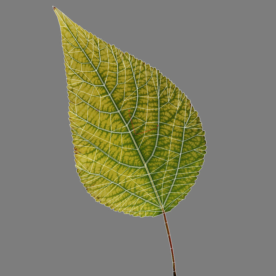 Autumn Leaf yellow royalty-free 3d model - Preview no. 5