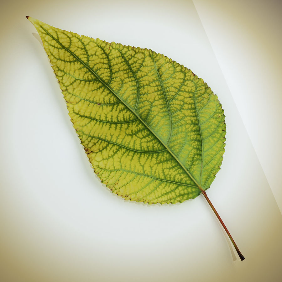 Autumn Leaf yellow royalty-free 3d model - Preview no. 1