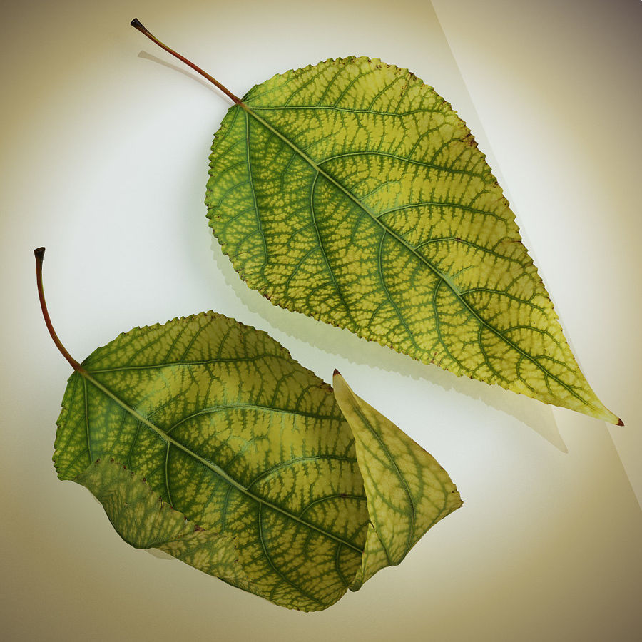 Autumn Leaf yellow royalty-free 3d model - Preview no. 3