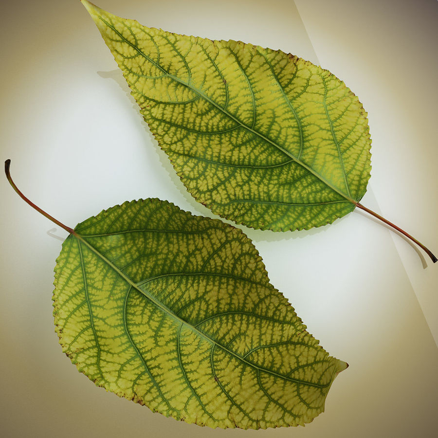 Autumn Leaf yellow royalty-free 3d model - Preview no. 2