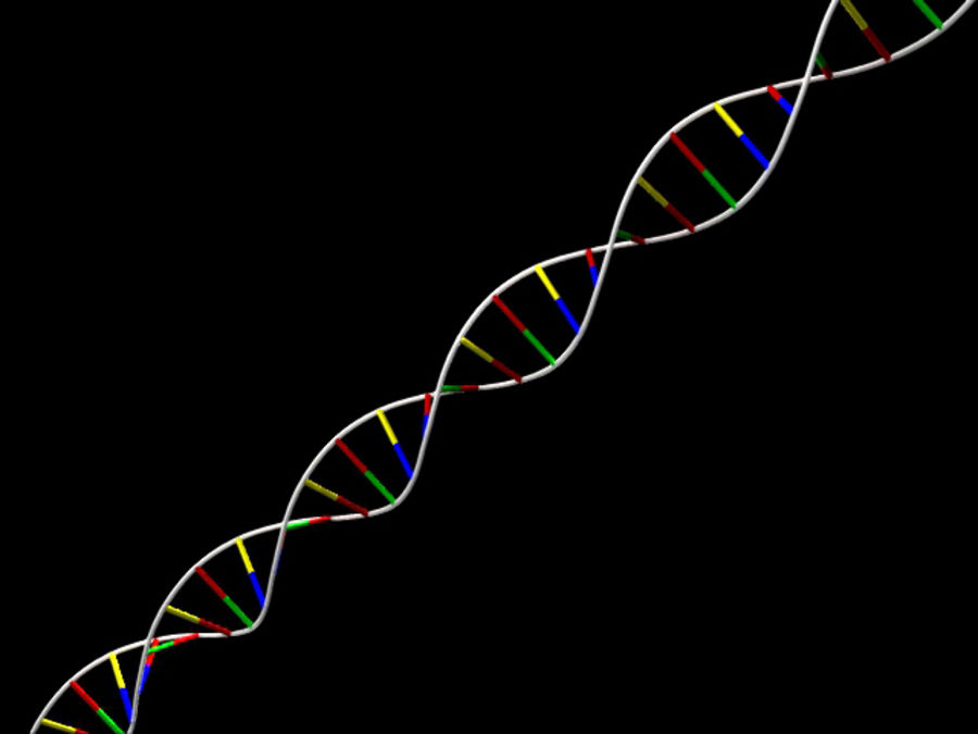 DNA strand royalty-free 3d model - Preview no. 2