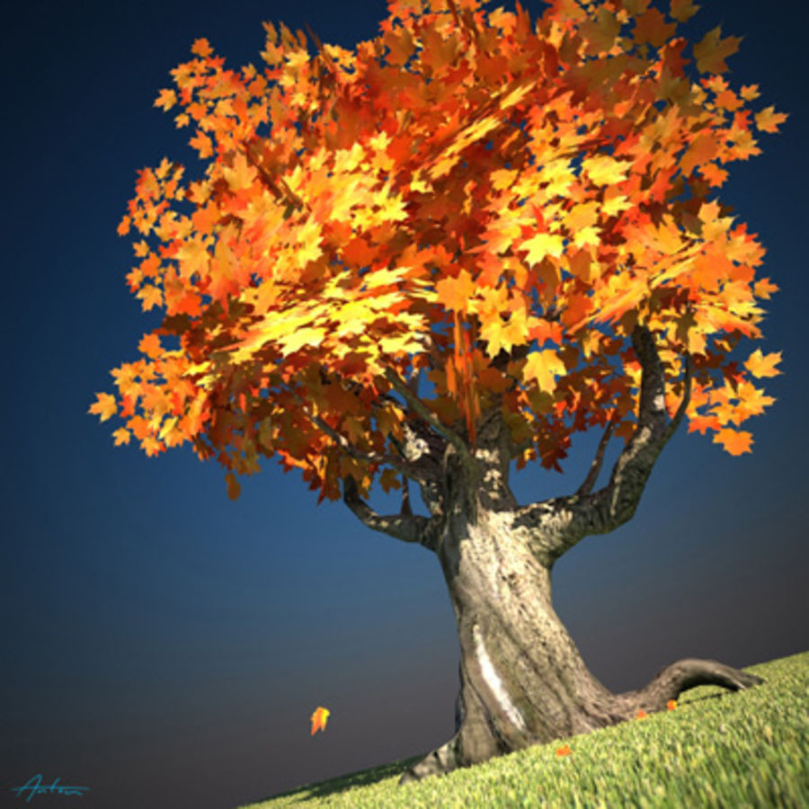 Maple Tree scene Low Poly royalty-free 3d model - Preview no. 1