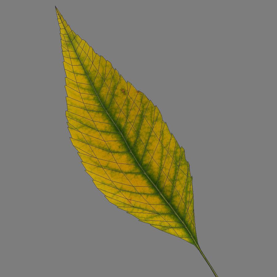 秋の葉の灰の木 royalty-free 3d model - Preview no. 5