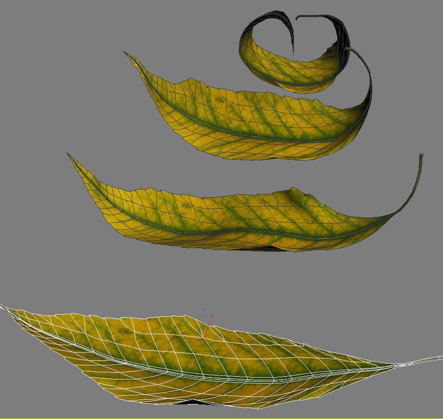 秋の葉の灰の木 royalty-free 3d model - Preview no. 6