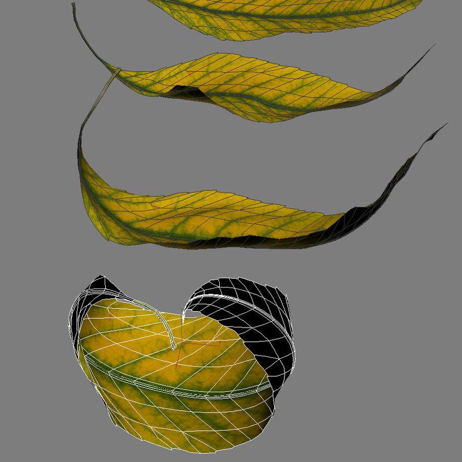 秋の葉の灰の木 royalty-free 3d model - Preview no. 7
