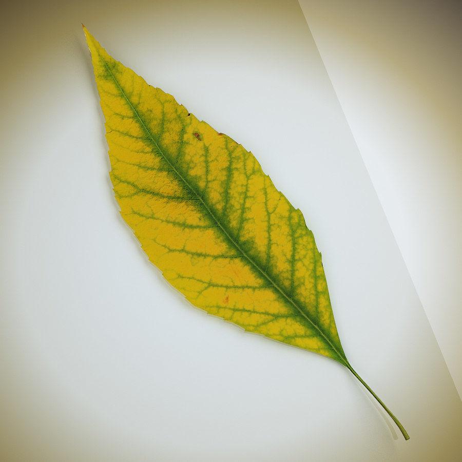 秋の葉の灰の木 royalty-free 3d model - Preview no. 1