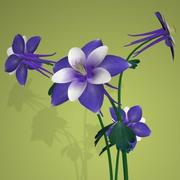 PL Columbine, Purple and White 3d model