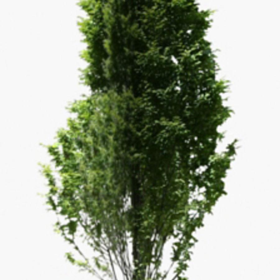 Drzewo 18 (niskie poli) royalty-free 3d model - Preview no. 1