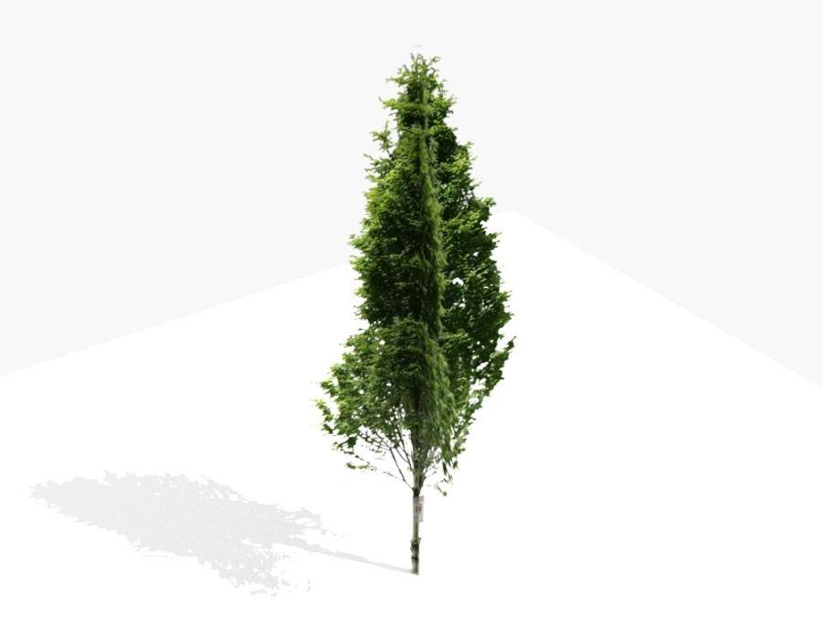 Drzewo 18 (niskie poli) royalty-free 3d model - Preview no. 3