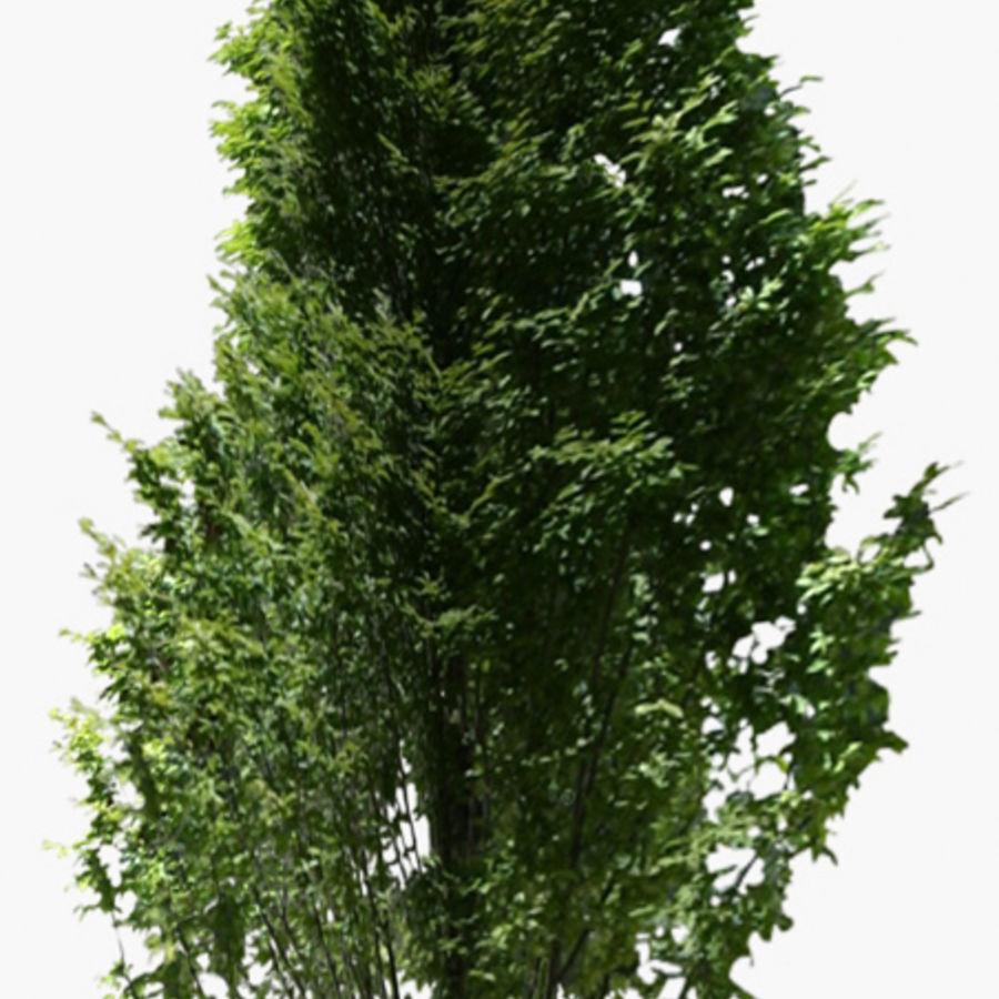 Drzewo 18 (niskie poli) royalty-free 3d model - Preview no. 2