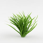 Bush_41_garden plant 3d model