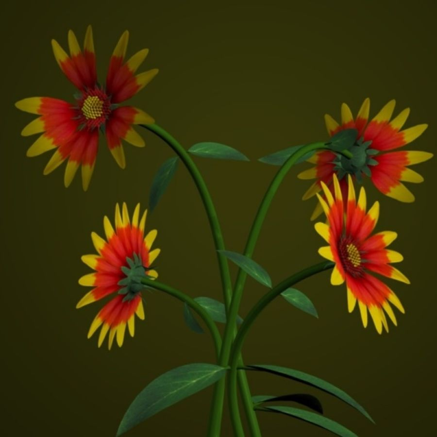 PL Indian Blanket royalty-free 3d model - Preview no. 1