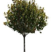 Drzewo 36 (low poly) 3d model