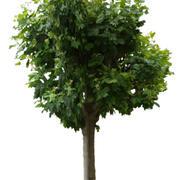 Drzewo 23 (low poly) 3d model