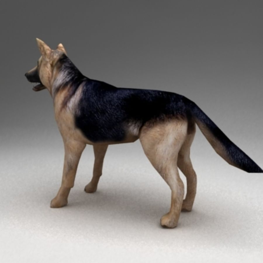 German shepherd rigged royalty-free 3d model - Preview no. 3