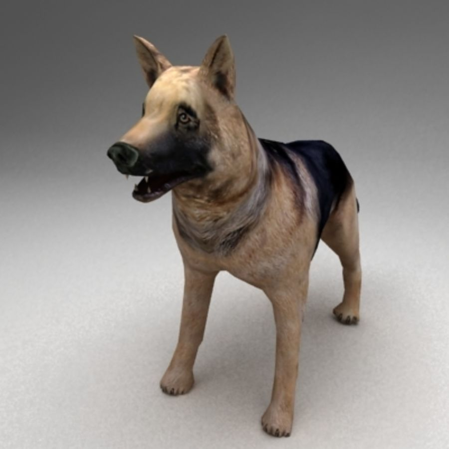 German shepherd rigged royalty-free 3d model - Preview no. 5