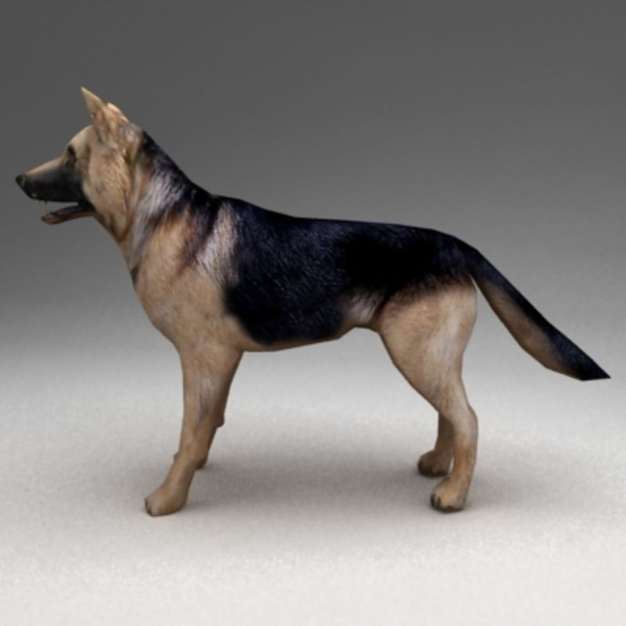 German shepherd rigged royalty-free 3d model - Preview no. 4