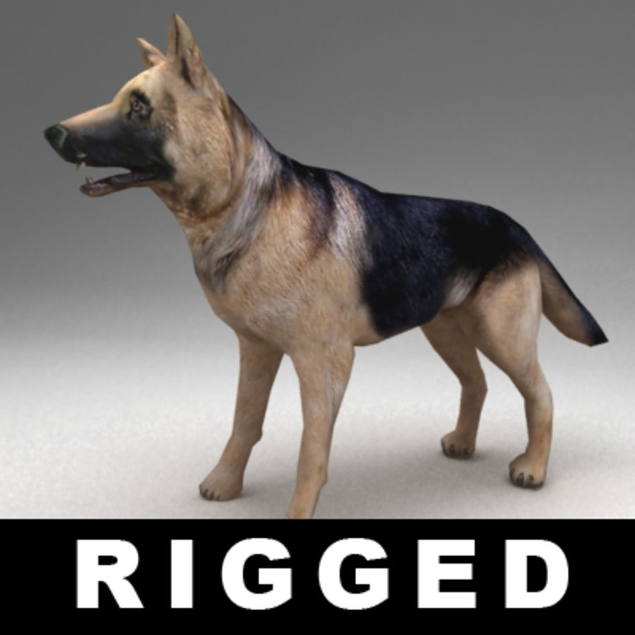 German shepherd rigged royalty-free 3d model - Preview no. 1