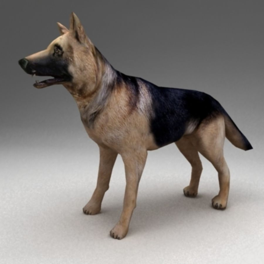 German shepherd rigged royalty-free 3d model - Preview no. 2