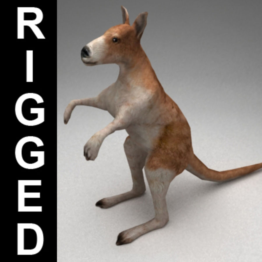 Kangaroo lowpoly rigged royalty-free 3d model - Preview no. 1