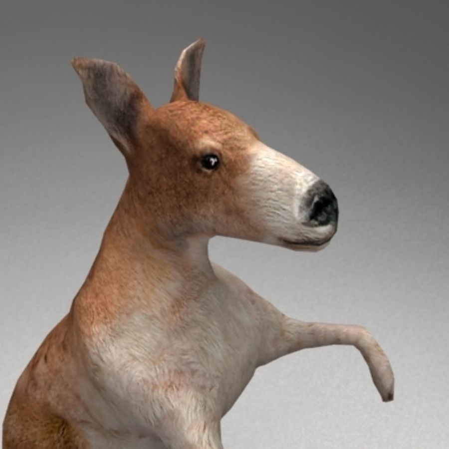 Kangaroo lowpoly rigged royalty-free 3d model - Preview no. 4
