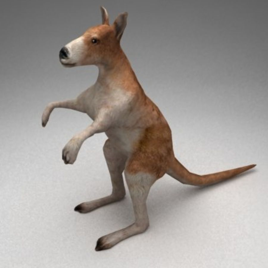 Kangaroo lowpoly rigged royalty-free 3d model - Preview no. 2