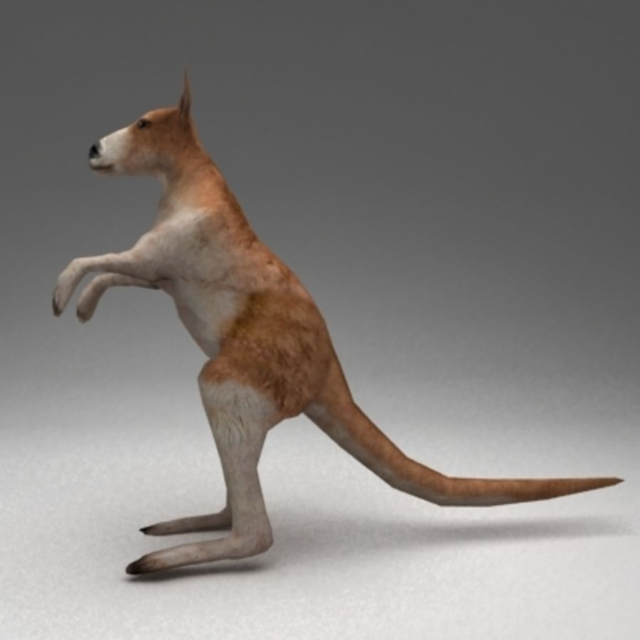 Kangaroo lowpoly rigged royalty-free 3d model - Preview no. 5