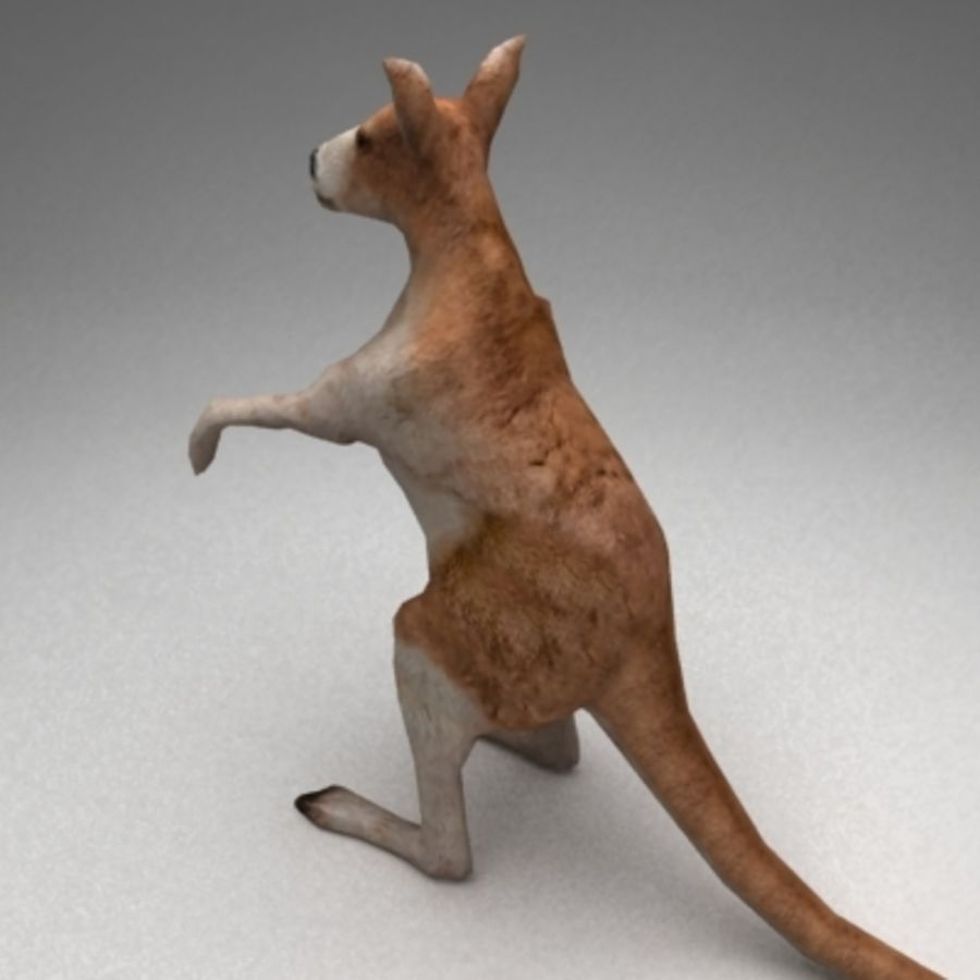 Kangaroo lowpoly rigged royalty-free 3d model - Preview no. 3