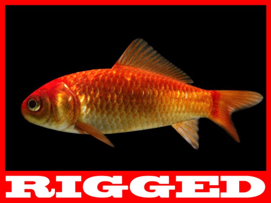 Akvaryum balığı royalty-free 3d model - Preview no. 5