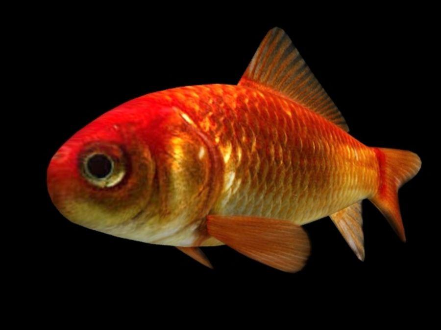 Akvaryum balığı royalty-free 3d model - Preview no. 4