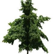 Drzewo 3 (niskie poli) 3d model