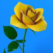 Rose Yellow 3d model