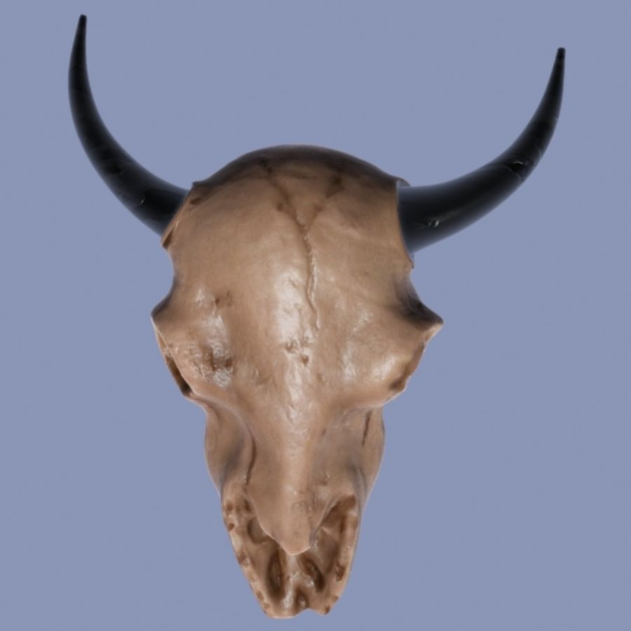Bison Skull royalty-free 3d model - Preview no. 1