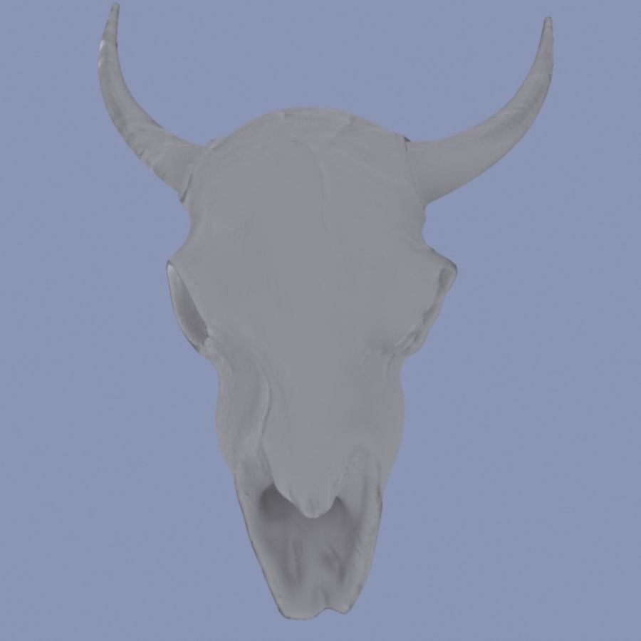 Bison Skull royalty-free 3d model - Preview no. 6