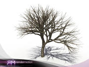 D2.C1.05 Dead tree, Arbol Seco 3d model