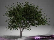 D2.C1.34 Lemon Tree-Limonero 3d model