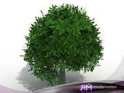 D2.C1.06 Arbusto Genérico, Arbusto Generico modelo 3d