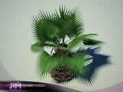 D2.C1.23 Белая пальма-Пальма Бланка 3d model