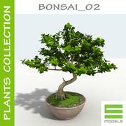 树 -  Bonsai_02 3d model
