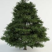 "Pin oak ""Quercus palustris"" 3d model"