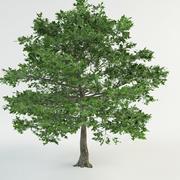"""oak """"quercus robur"""" 3d model"""