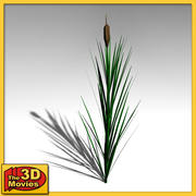 common reed 3d model 3d model