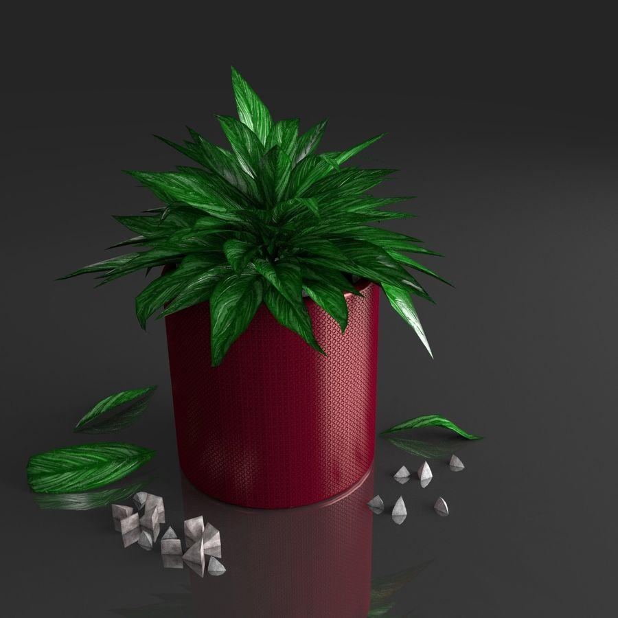 Tropical house plant royalty-free 3d model - Preview no. 1