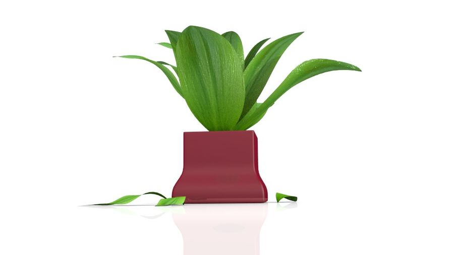 Tropical house plant royalty-free 3d model - Preview no. 7