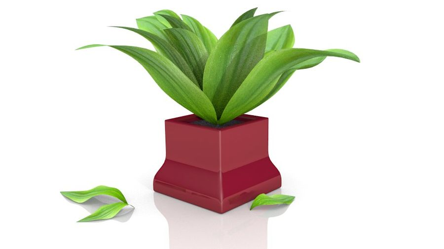 Tropical house plant royalty-free 3d model - Preview no. 6