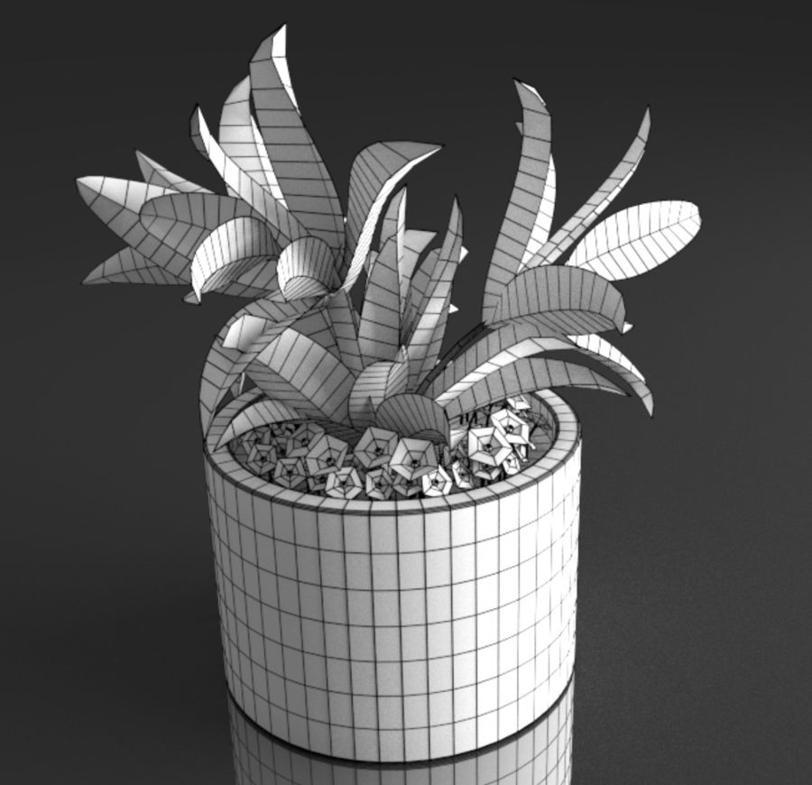 Tropical house plant royalty-free 3d model - Preview no. 12