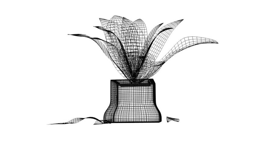 Tropical house plant royalty-free 3d model - Preview no. 8
