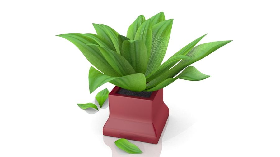 Tropical house plant royalty-free 3d model - Preview no. 4
